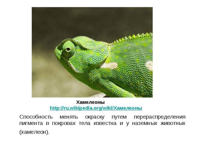 Способность менять окраску путем перераспределения пигмента в покровах тела известна и у наземных животных (хамелеон). Способность менять окраску путем перераспределения пигмента в покровах тела известна и у наземных животных (хамелеон).