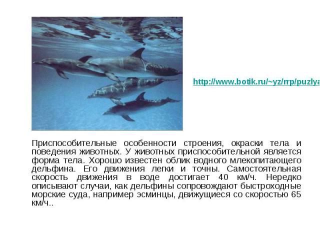 Приспособительные особенности строения, окраски тела и поведения животных. У животных приспособительной является форма тела. Хорошо известен облик водного млекопитающего дельфина. Его движения легки и точны. Самостоятельная скорость движения в воде …