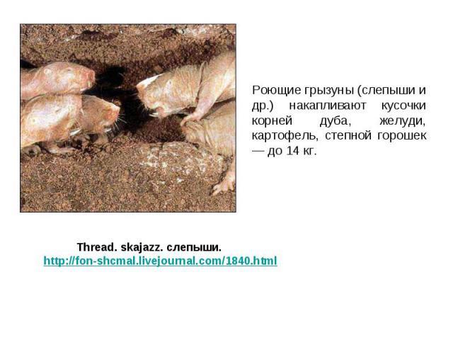 Роющие грызуны (слепыши и др.) накапливают кусочки корней дуба, желуди, картофель, степной горошек — до 14 кг. Роющие грызуны (слепыши и др.) накапливают кусочки корней дуба, желуди, картофель, степной горошек — до 14 кг.