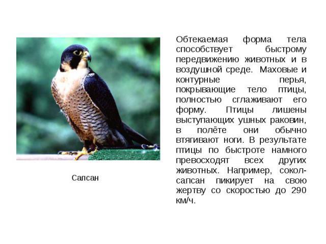 Обтекаемая форма тела способствует быстрому передвижению животных и в воздушной среде. Маховые и контурные перья, покрывающие тело птицы, полностью сглаживают его форму. Птицы лишены выступающих ушных раковин, в полёте они обычно втягивают ноги. В р…