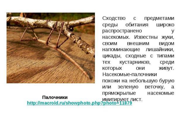 Сходство с предметами среды обитания широко распространено у насекомых. Известны жуки, своим внешним видом напоминающие лишайники, цикады, сходные с типами тех кустарников, среди которых они живут. Насекомые-палочники похожи на небольшую бурую или з…