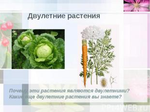 Двулетние растения