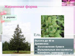 Жизненная форма - внешний облик растения