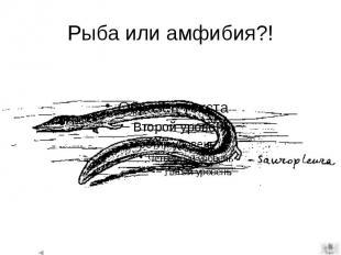 Рыба или амфибия?!