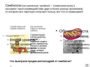 """Симбиозом (от греческого """"symbiosis"""" - """"совместная жизнь"""") н"""
