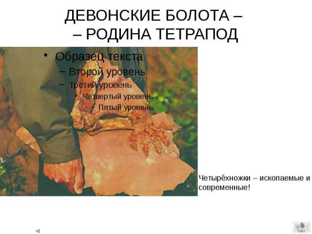 ДЕВОНСКИЕ БОЛОТА – – РОДИНА ТЕТРАПОД
