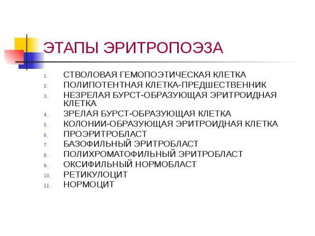 ЭТАПЫ ЭРИТРОПОЭЗА СТВОЛОВАЯ ГЕМОПОЭТИЧЕСКАЯ КЛЕТКА ПОЛИПОТЕНТНАЯ КЛЕТКА-ПРЕДШЕСТВЕННИК НЕЗРЕЛАЯ БУРСТ-ОБРАЗУЮЩАЯ ЭРИТРОИДНАЯ КЛЕТКА ЗРЕЛАЯ БУРСТ-ОБРАЗУЮЩАЯ КЛЕТКА КОЛОНИИ-ОБРАЗУЮЩАЯ ЭРИТРОИДНАЯ КЛЕТКА ПРОЭРИТРОБЛАСТ БАЗОФИЛЬНЫЙ ЭРИТРОБЛАСТ ПОЛИХРОМА…