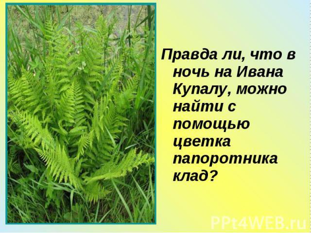 Правда ли, что в ночь на Ивана Купалу, можно найти с помощью цветка папоротника клад? Правда ли, что в ночь на Ивана Купалу, можно найти с помощью цветка папоротника клад?