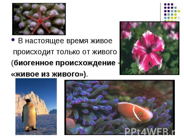 В настоящее время живое В настоящее время живое происходит только от живого (биогенное происхождение – «живое из живого»).