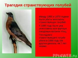 Трагедия странствующих голубей