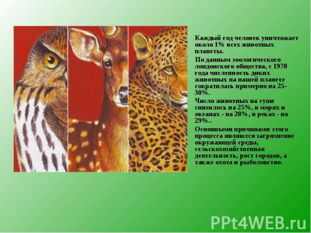 Каждый год человек уничтожает около 1% всех животных планеты. Каждый год человек уничтожает около 1% всех животных планеты. По данным зоологического лондонского общества, с 1970 года численность диких животных на нашей планете сократилась примерно н…
