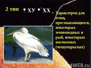Характерен для птиц, пресмыкающихся, некоторых земноводных и рыб, некоторых насе