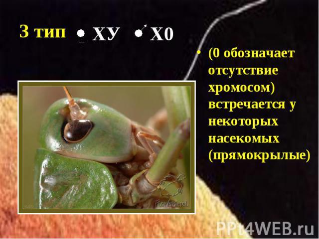 (0 обозначает отсутствие хромосом) встречается у некоторых насекомых (прямокрылые) (0 обозначает отсутствие хромосом) встречается у некоторых насекомых (прямокрылые)