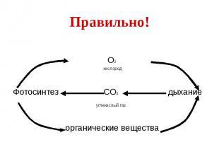 Правильно! О2 кислород Фотосинтез СО2 дыхание углекислый газ органические вещест
