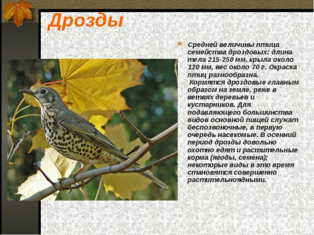 Дрозды Средней величины птица семейства дроздовых: длина тела 215-250 мм, крыла около 120 мм, вес около 70 г. Окраска птиц разнообразна. Кормятся дроздовые главным образом на земле, реже в ветвях деревьев и кустарников. Для подавляющего большинства …