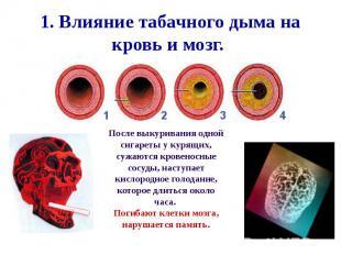 1. Влияние табачного дыма на кровь и мозг.