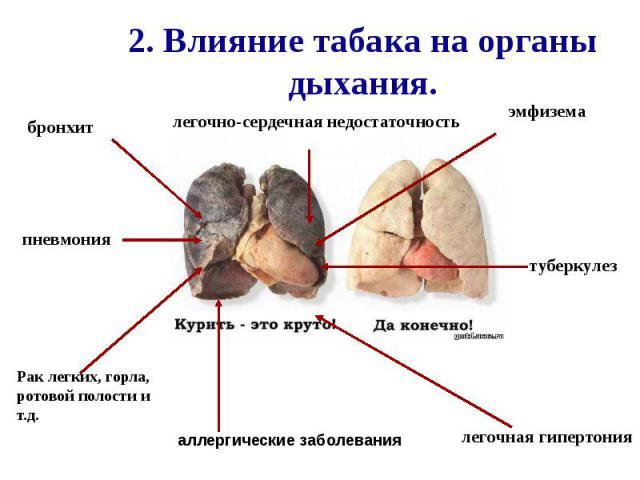2. Влияние табака на органы дыхания.