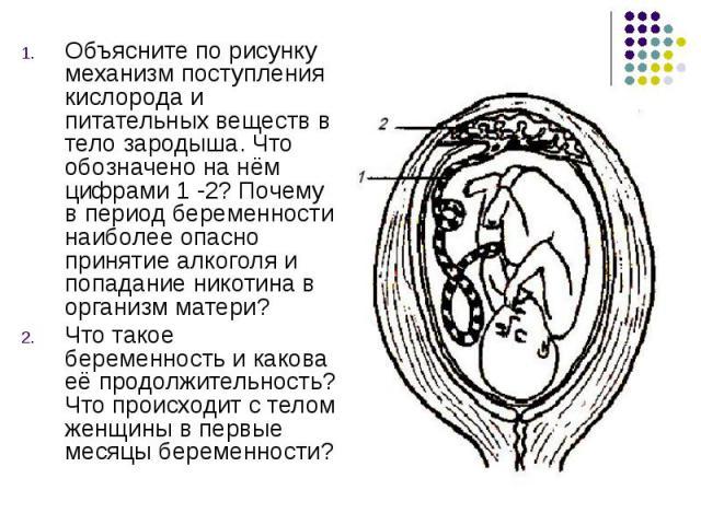Объясните по рисунку механизм поступления кислорода и питательных веществ в тело зародыша. Что обозначено на нём цифрами 1 -2? Почему в период беременности наиболее опасно принятие алкоголя и попадание никотина в организм матери? Объясните по рисунк…
