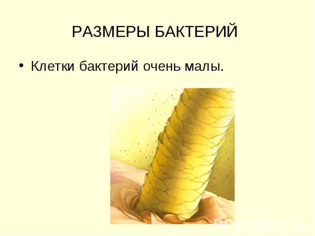 РАЗМЕРЫ БАКТЕРИЙ Клетки бактерий очень малы.