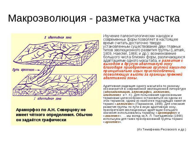 Изучение палеонтологических находок и современных форм позволяет в настоящее время считать достаточно твердо установленным существование двух главных типов эволюционного развития группы (Lamark, 1809, Haeckel, 1866; и др.): возникновение большого чи…