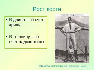 В длина – за счет хряща В длина – за счет хряща В толщину – за счет надкостницы