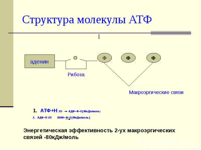 Структура молекулы АТФ