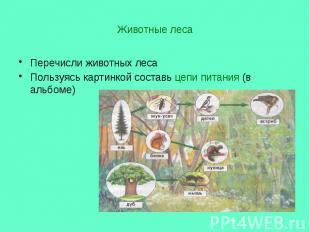Животные леса Перечисли животных леса Пользуясь картинкой составь цепи питания (