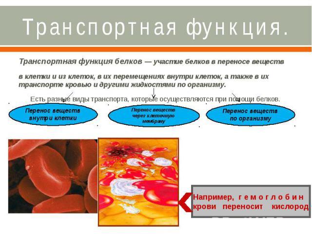 Транспортная функция. Транспортная функция белков — участие белков в переносе веществ в клетки и из клеток, в их перемещениях внутри клеток, а также в их транспорте кровью и другими жидкостями по организму. Есть разные виды транспорта, которые осуще…
