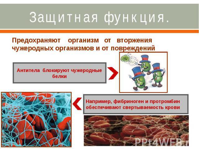 Защитная функция. Предохраняют организм от вторжения чужеродных организмов и от повреждений