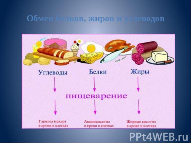 Обмен белков, жиров и углеводов