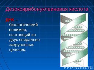 Дезоксирибонуклеиновая кислота ДНК –биологический полимер, состоящий из двух спи