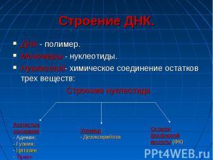 Строение ДНК. ДНК - полимер. Мономеры - нуклеотиды. Нуклеотид- химическое соедин