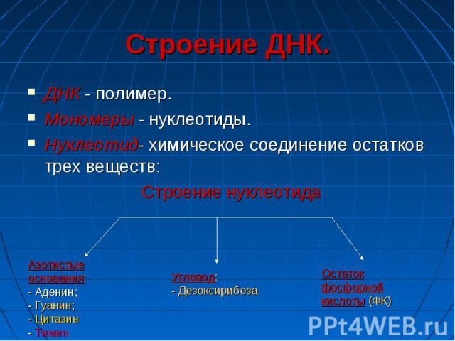 Строение ДНК. ДНК - полимер. Мономеры - нуклеотиды. Нуклеотид- химическое соединение остатков трех веществ:
