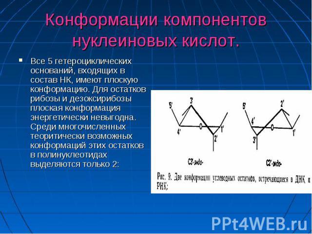 Конформации компонентов нуклеиновых кислот. Все 5 гетероциклических оснований, входящих в состав НК, имеют плоскую конформацию. Для остатков рибозы и дезоксирибозы плоская конформация энергетически невыгодна. Среди многочисленных теоритически возмож…