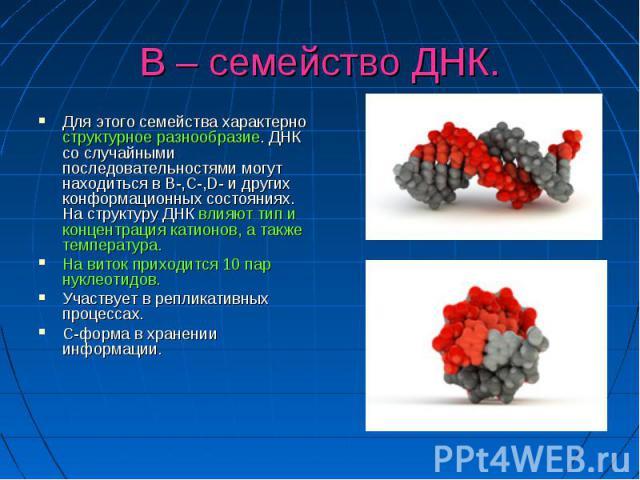 В – семейство ДНК. Для этого семейства характерно структурное разнообразие. ДНК со случайными последовательностями могут находиться в В-,С-,D- и других конформационных состояниях. На структуру ДНК влияют тип и концентрация катионов, а также температ…