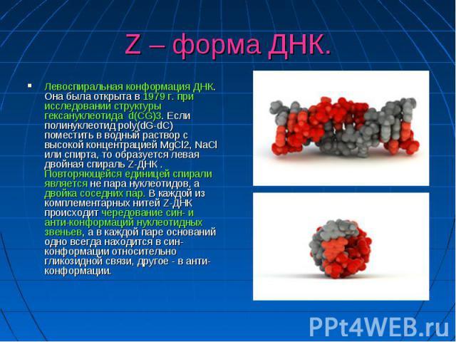 Z – форма ДНК. Левоспиральная конформация ДНК. Она была открыта в 1979 г. при исследовании структуры гексануклеотида d(CG)3. Если полинуклеотид poly(dG-dC) поместить в водный раствор с высокой концентрацией MgCl2, NaCl или спирта, то образуется лева…