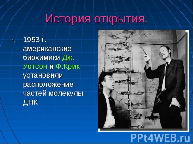 История открытия. 1953 г. американские биохимики Дж. Уотсон и Ф.Крик установили расположение частей молекулы ДНК