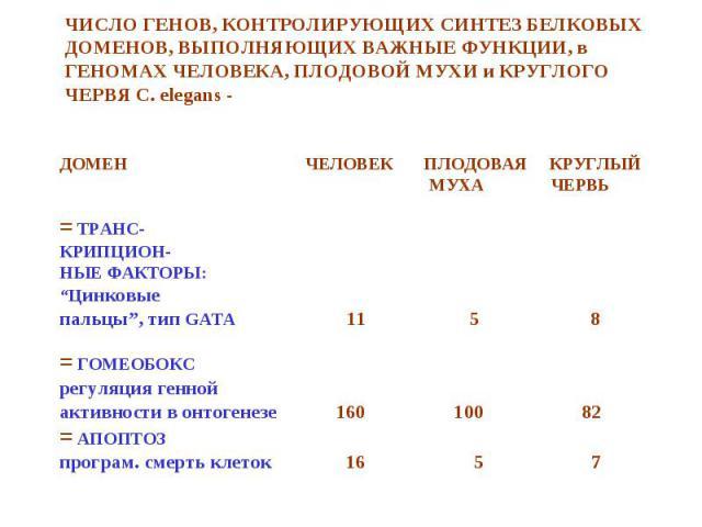 """ДОМЕН ЧЕЛОВЕК ПЛОДОВАЯ КРУГЛЫЙ ДОМЕН ЧЕЛОВЕК ПЛОДОВАЯ КРУГЛЫЙ МУХА ЧЕРВЬ = ТРАНС- КРИПЦИОН- НЫЕ ФАКТОРЫ: """"Цинковые пальцы"""", тип GATA 11 5 8 = ГОМЕОБОКС регуляция генной активности в онтогенезе 160 100 82 = АПОПТОЗ програм. смерть клеток 16 5 7"""