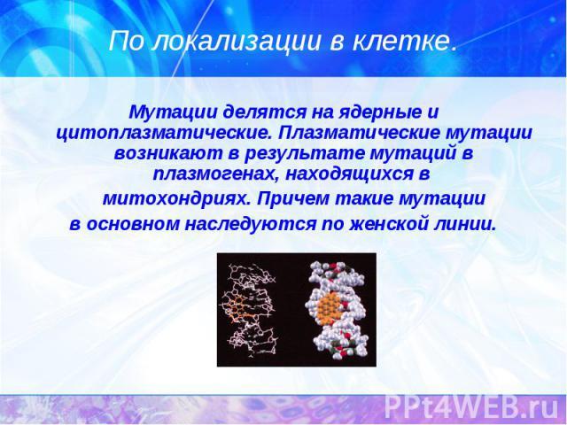 Мутации делятся на ядерные и цитоплазматические. Плазматические мутации возникают в результате мутаций в плазмогенах, находящихся в Мутации делятся на ядерные и цитоплазматические. Плазматические мутации возникают в результате мутаций в плазмогенах,…