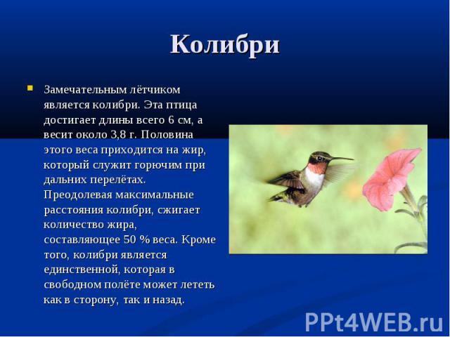 Замечательным лётчиком является колибри. Эта птица достигает длины всего 6 см, а весит около 3,8 г. Половина этого веса приходится на жир, который служит горючим при дальних перелётах. Преодолевая максимальные расстояния колибри, сжигает количество …
