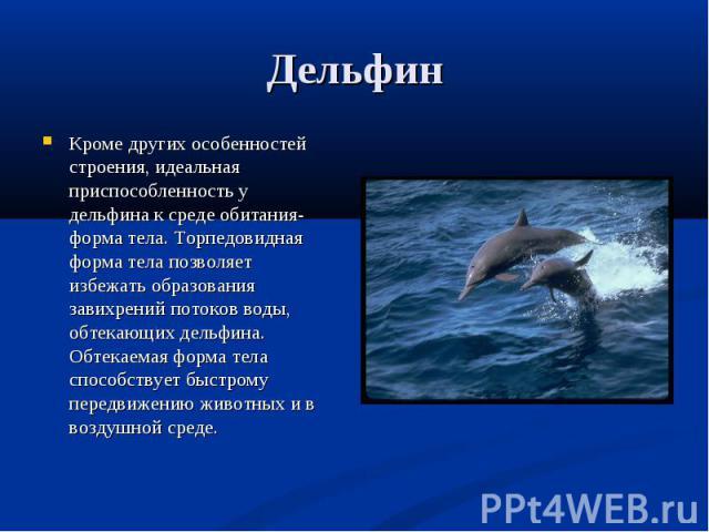 Кроме других особенностей строения, идеальная приспособленность у дельфина к среде обитания- форма тела. Торпедовидная форма тела позволяет избежать образования завихрений потоков воды, обтекающих дельфина. Обтекаемая форма тела способствует быстром…