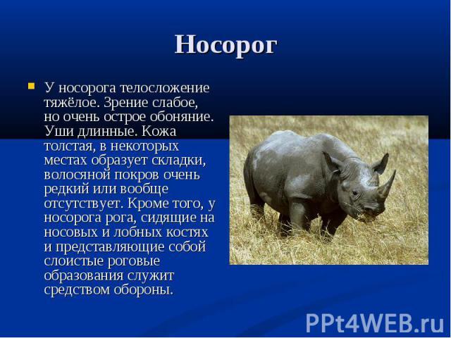 У носорога телосложение тяжёлое. Зрение слабое, но очень острое обоняние. Уши длинные. Кожа толстая, в некоторых местах образует складки, волосяной покров очень редкий или вообще отсутствует. Кроме того, у носорога рога, сидящие на носовых и лобных …