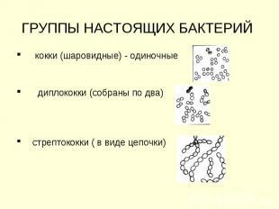ГРУППЫ НАСТОЯЩИХ БАКТЕРИЙ кокки (шаровидные) - одиночные диплококки (собраны по