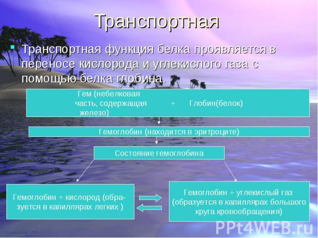 Транспортная функция белка проявляется в переносe кислорода и углекислого газа с помощью белка глобина. Транспортная функция белка проявляется в переносe кислорода и углекислого газа с помощью белка глобина.