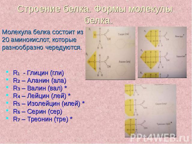 Молекула белка состоит из Молекула белка состоит из 20 аминокислот, которые разнообразно чередуются.