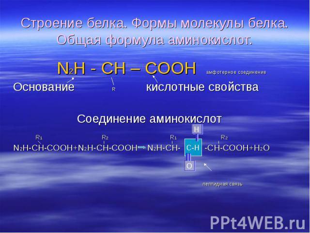 N2H - CH – COOH амфотерное соединение N2H - CH – COOH амфотерное соединение Основание R кислотные свойства Соединение аминокислот R1 R2 R1 R2 N2H-CH-COOH+N2H-CH-COOH N2H-CH- -CH-COOH+H2O пептидная связь