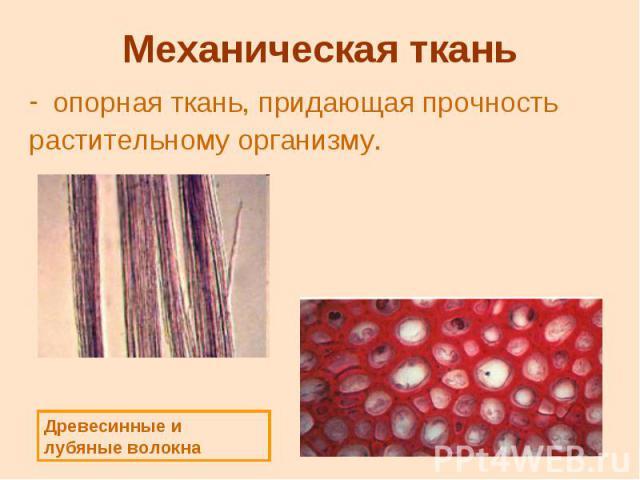Механическая ткань опорная ткань, придающая прочность растительному организму.