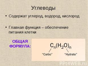Содержат углерод, водород, кислород Содержат углерод, водород, кислород Главная