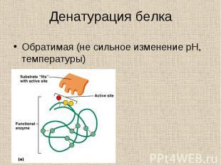 Обратимая (не сильное изменение pH, температуры) Обратимая (не сильное изменение