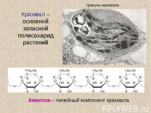 Крахмал – основной запасной полисахарид растений
